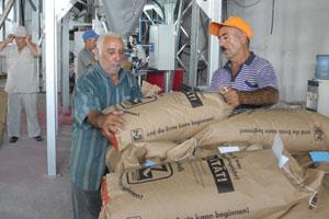 Zertifiziertes Saatgut aus Österreich für mehr Ertrag und höhere Qualität
