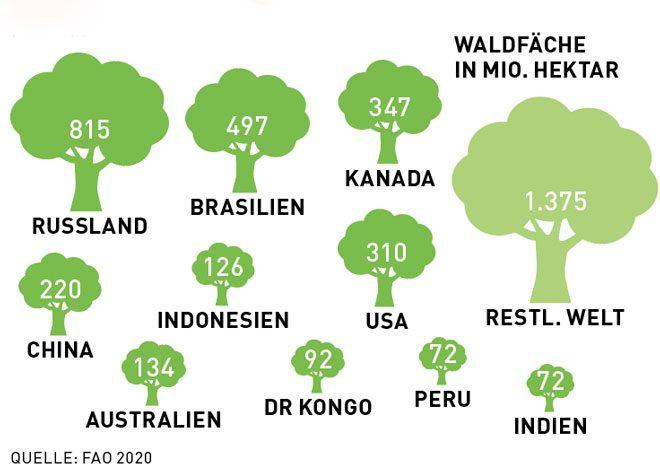 Aktuelle Zahl Schrumpfender Wald