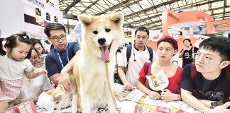Haustiere boomen in Asien. Im Bild: ein Hund auf der Pet Fair Asia